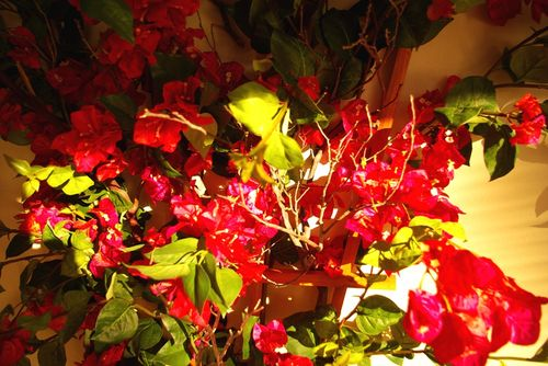 Closeup of Bougainvillea vine in leasing office