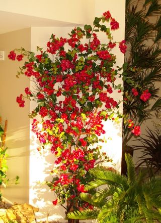 Custom Bougainvillea Vine in leasing office